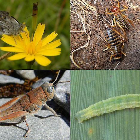 Terrestrial invertebrates include butterflies, moths (caterpillar), weta, and grasshoppers